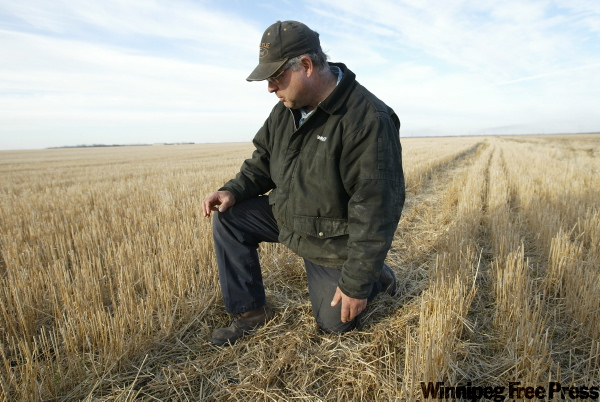 Brad Rasmussen gives us a closeup look at an unburned field. Sunlight won't make it through the matted stubble, he explains, so the soil won't dry.