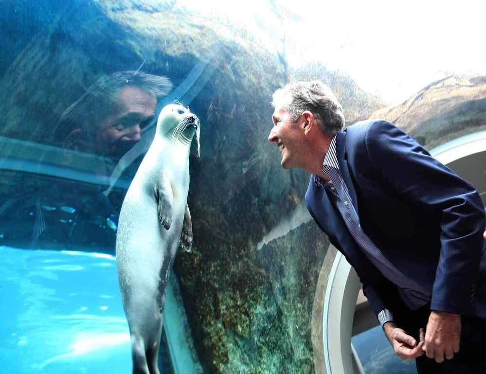 Manitoba PC leader Brian Pallister looks eye-to-eye with a seal at the Journey to Churchill exhibit at the Assiniboine Park Zoo after holding a press conference announcing new funding for Manitoba tourism during the provincial election. Pallister won the election and became the 22nd Premier of Manitoba on April 19, 2016. -