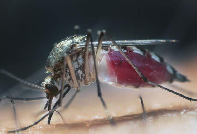 Mosquito counts in Winnipeg are up.