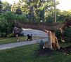 'All hands on deck' as city cleans up in aftermath of storm
