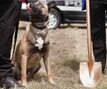 WPS launching internal investigation following fraud allegations in K9 unit