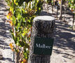 Malbec reaching new heights