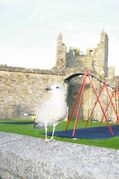 Steve MacNaull