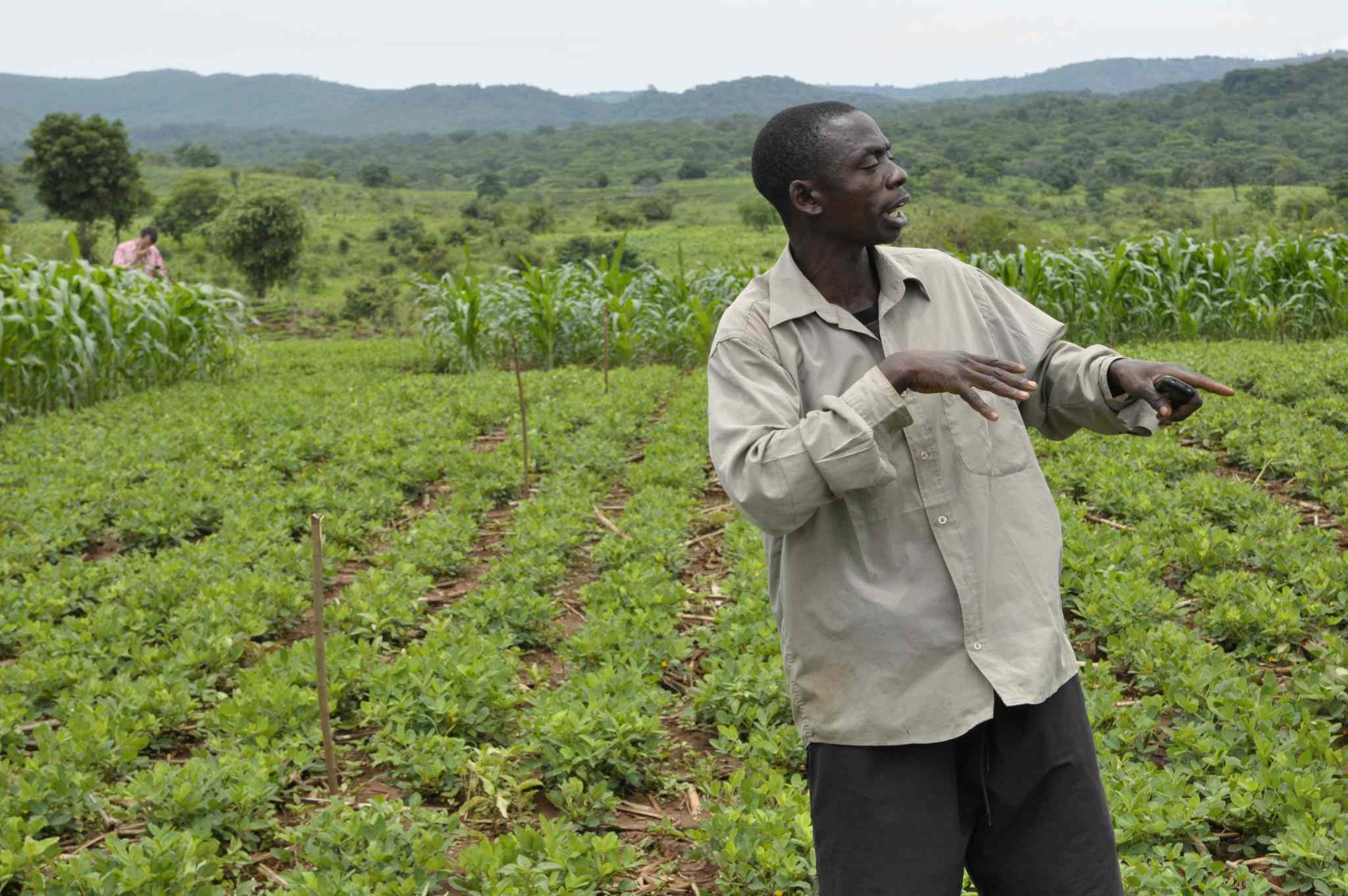 Malawi farmer Thomas Nkhunda has seen dramatic improvements in his farm's performance since adopting conservation agriculture.