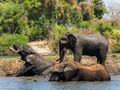 Dreams become reality in wild Zambia