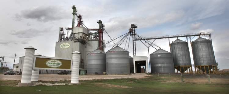 Puratone's feed plant in Niverville. The hog company has faced a number of financial challenges analysts say the entire industry is coping with.