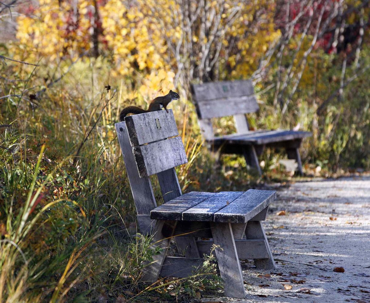 Benches provide spots for quiet contemplation. (KEN GIGLIOTTI / WINNIPEG FREE PRESS)