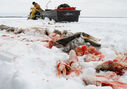 Some of these fish are left on Lake Manitoba after they've been caught. Randy Strawa sits in the background after processing some of the days catch. (Jessica Burtnick / Winnipeg Free Press)