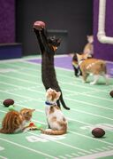 This photo provided by Crown Media Family Networks shows kittens playing football in a scene from the Hallmark Channel's
