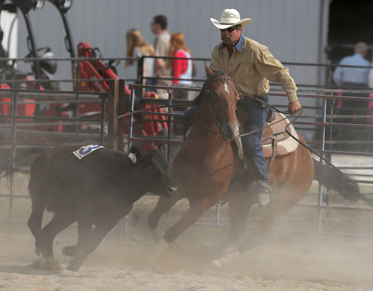 Man versus beast in the team penning competition Saturday. (Trevor Hagan / Winnipeg Free Press)