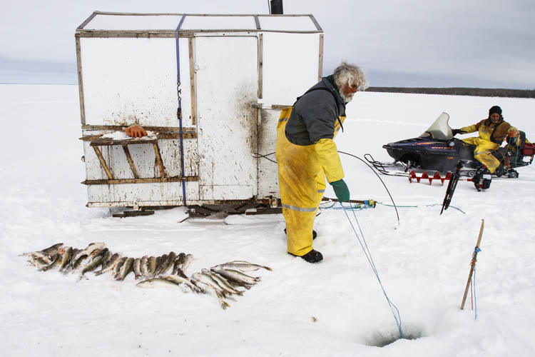 Frank Kenyon (left and below) and helper Randy Strawa pull in one of 45 gill nets they have set in Portage Bay on Lake  Manitoba. Up to half of the fish they catch will simply be left on the ice to feed the ravens.