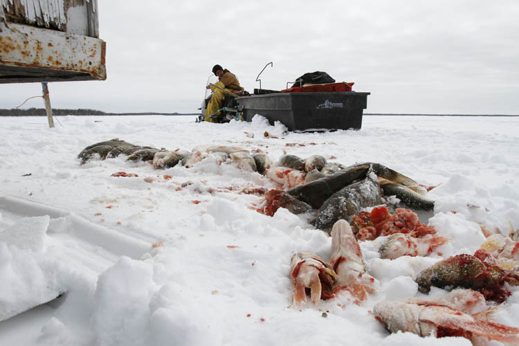 Fisher Randy Strawa sits atop a snow machine on Lake Manitoba after processing one of about 45 gill nets owned by local ice fisherman Frank Kenyon.