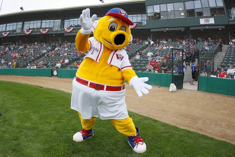 Goldie, the Winnipeg Goldeyes' mascot, gets the crowd going as they enter Shaw Park.