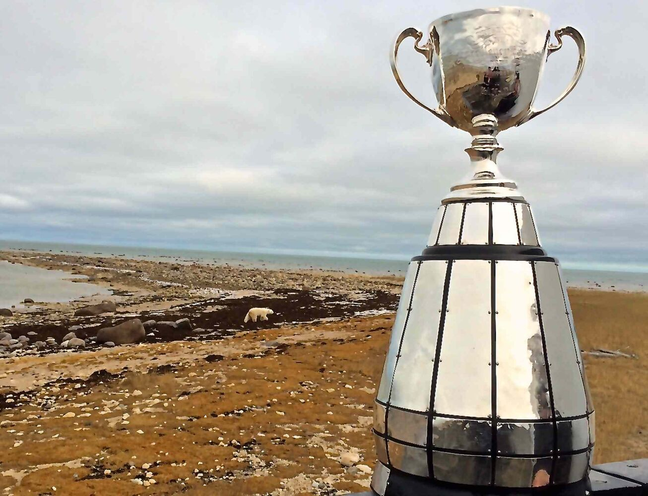 A polar-bear, unbeknownst, poses for a picture with the Grey Cup. The trophy was in Churchill as part of an eight-day tour through northern Manitoba to help promote the Grey Cup game in Winnipeg this year. (Michel LaRiviere / Travel Manitoba)