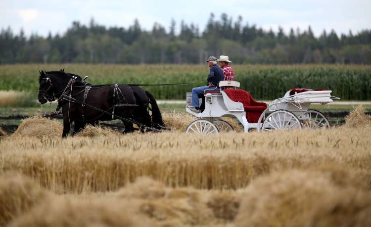 A horse-drawn buggy is seen at the Steinbach Pioneer Days at the Steinbach Mennonite Heritage Village, Sunday. (TREVOR HAGAN / WINNIPEG FREE PRESS)