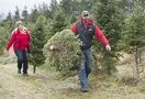 Pricey Christmas trees 10 years in the making