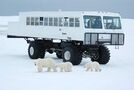 Tours to see Arctic icons up as overall tourism trade rebounds