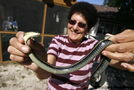 Elderly residents battle garter snake infestation