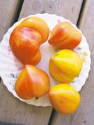 One of the few bicolour oxheart tomatoes available, Orange Russian has red marbling and a meaty flavour.  Great in salads. 90 days from transplant. Not a prolific producer. (Photo credit: )