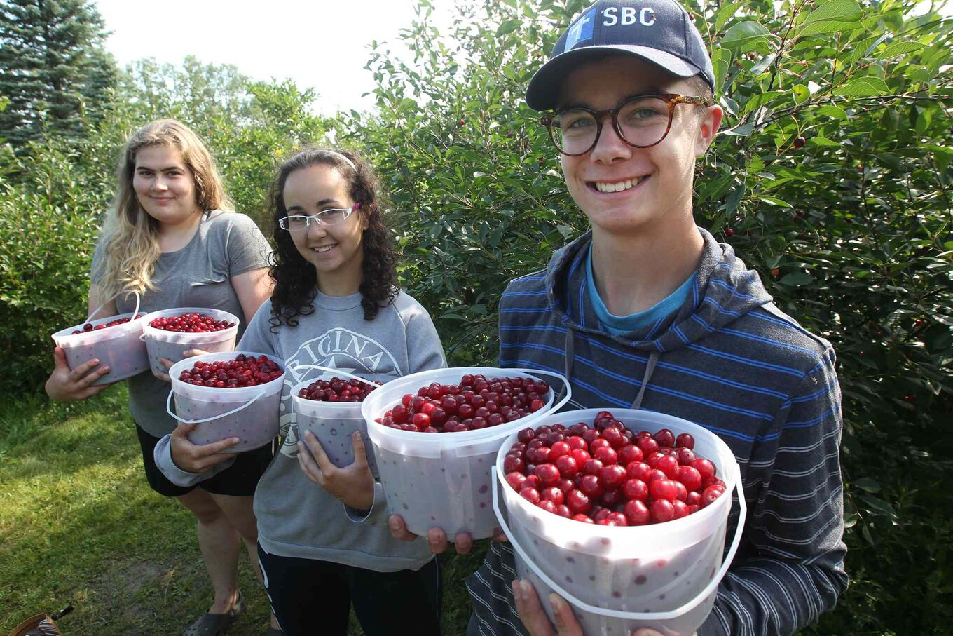 Megan Ronald, Elizabeth Forest and Marcus Loewen with tart cherries picked for client. (Joe Bryksa / Winnipeg Free Press)