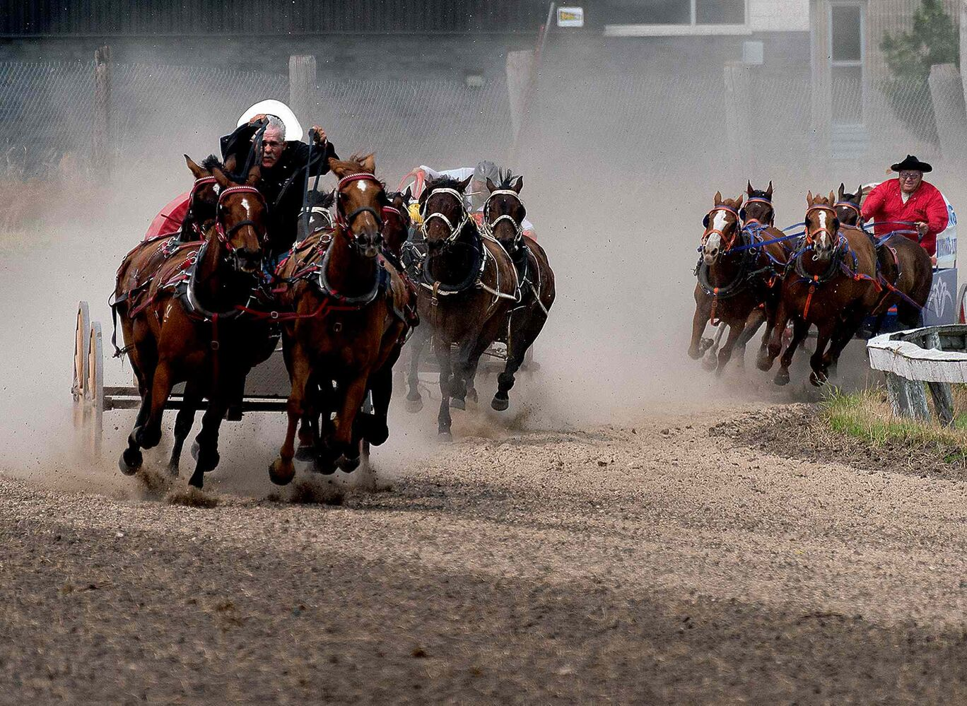 The pony chuckwagon racers come in to finish at the Morris Stampede Thursday.  (Sarah Taylor / Winnipeg Free Press)