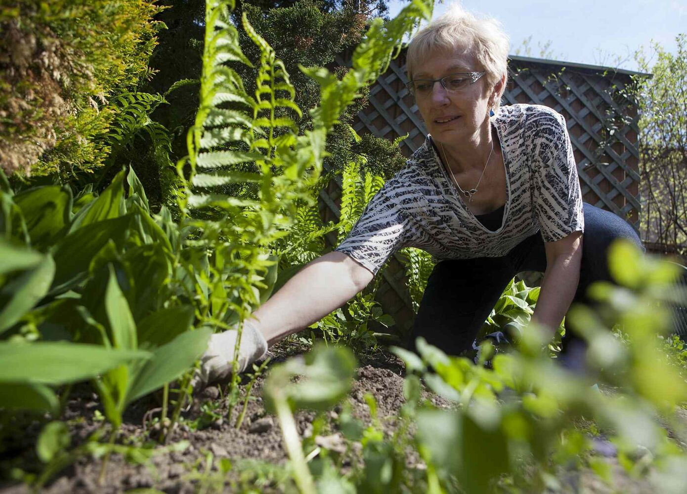 Eileen Boxall tends to her backyard garden in Toronto. (Jesse Johnston / The Canadian Press)