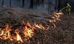 Canada offers more aid for Australia as bushfires burn across country