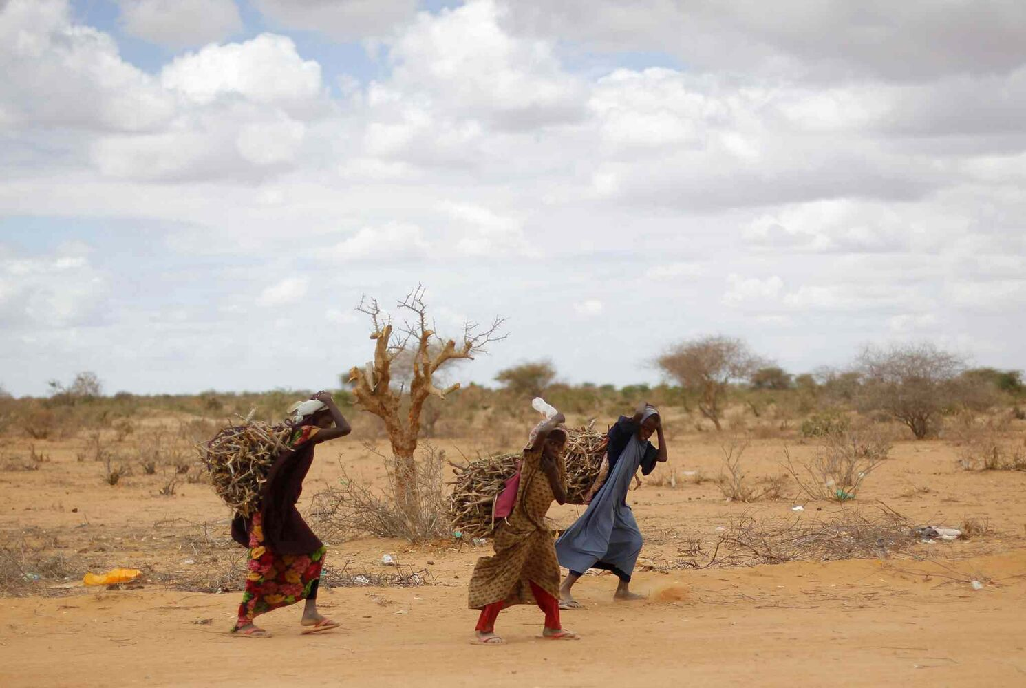 In this August 2011 photo, Somali refugees carry firewood to the LFO refugee camp outside  Dadaab, Eastern Kenya, 100 kilometers from the Somali border. Built in 1991 for 90,000 people, the camp has swelled to more than 400,000 registered refugees because of Somalia's long-running conflict and now its famine. Another 40,000 are waiting for official registration. New arrivals live on a 21-day ration handed out by the U.N., until they are formally registered. (Jerome Delay / The Associated Press)