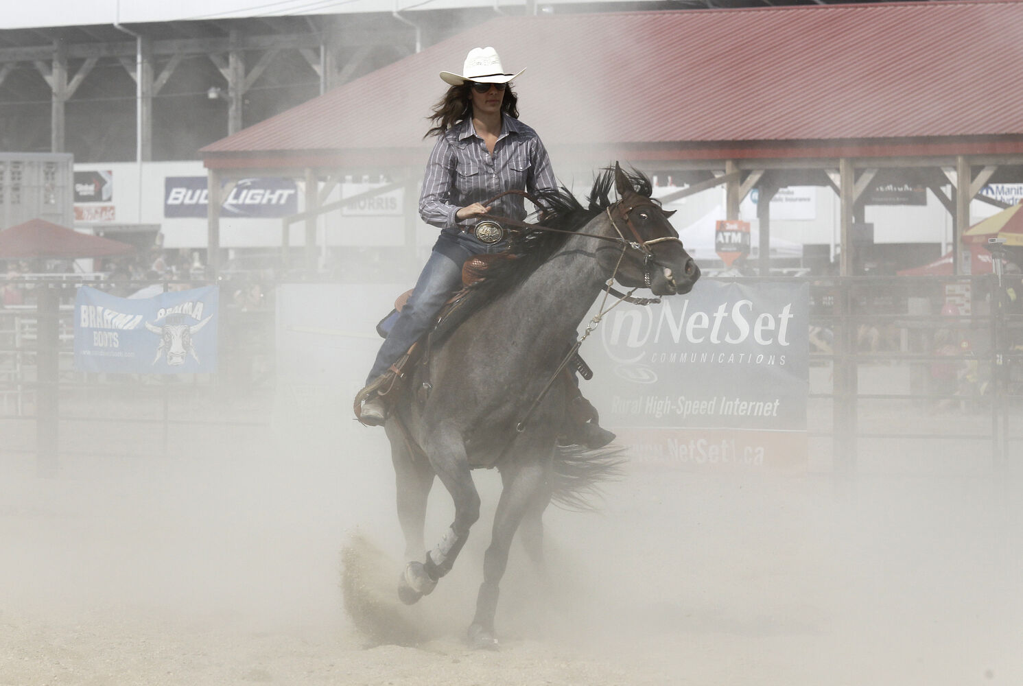 A participant in the Manitoba Team Penning Competition, at the Morris Stampede Saturday. (Trevor Hagan / Winnipeg Free Press)