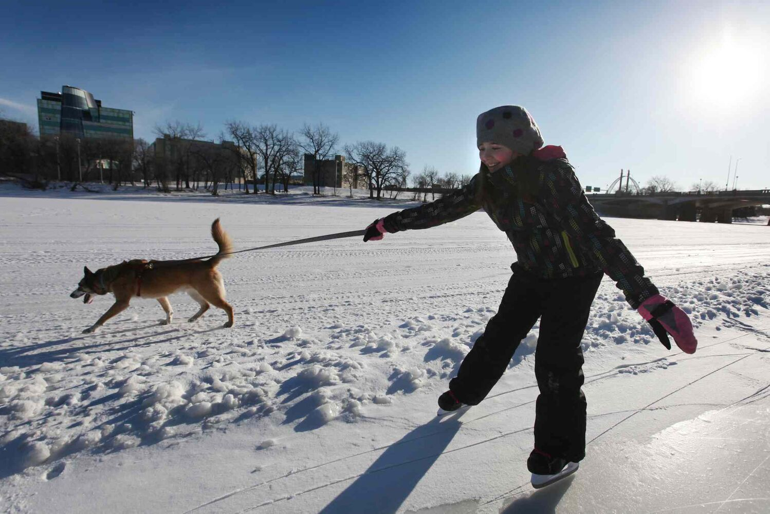 Eleven-year-old Isabel Elliott-Boothe laughs as her part-Husky dog Rock pulls her along the ice on the Red River Thursday. (Ruth Bonneville / Winnipeg Free Press)