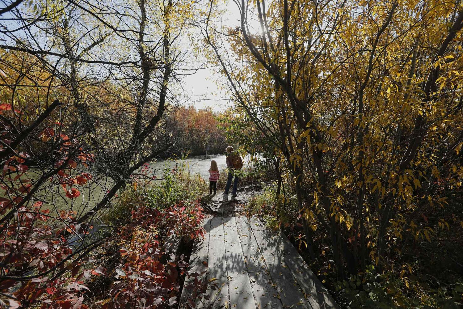 An afternoon walk is a great time to connect with nature, as well as with people. (KEN GIGLIOTTI / WINNIPEG FREE PRESS)