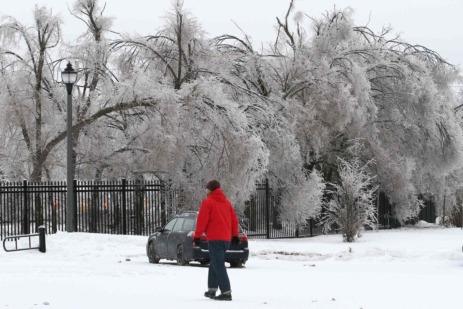 A man walks by trees heavy with ice in Kingston Ont., on Sunday.
