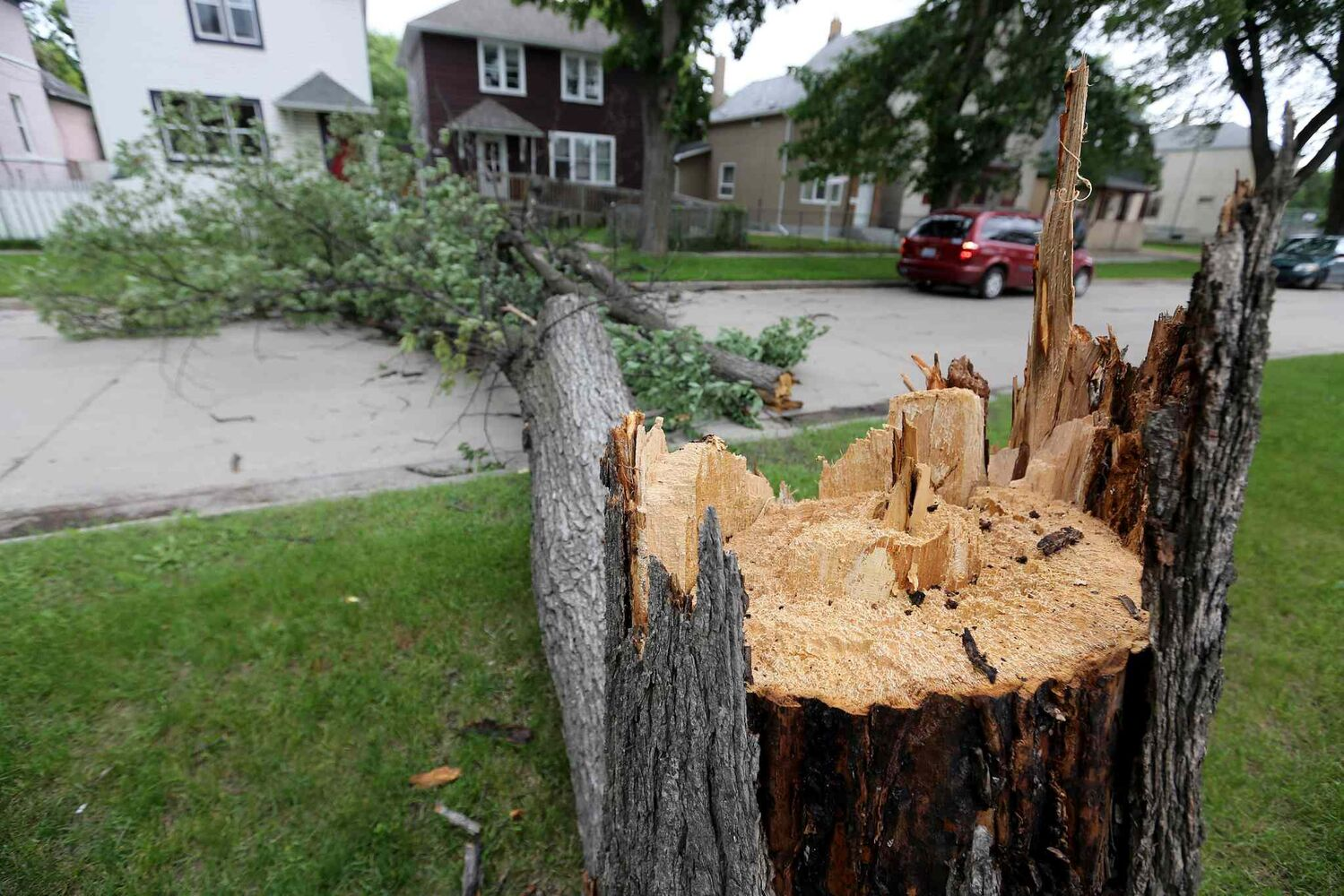 A large tree broken at the trunk lays across Pritchard Avenue between Charles and Aikens after strong winds overnight, Sunday, June 29, 2014.  (Trevor Hagan / Winnipeg Free Press)