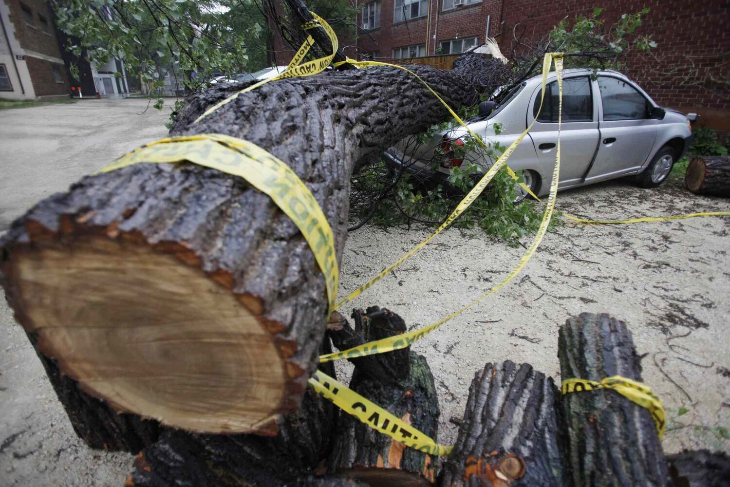 A tree blown over by strong winds damaged a parked car in Winnipeg, Sunday morning, June 29, 2014.  (John Woods / The Canadian Press)