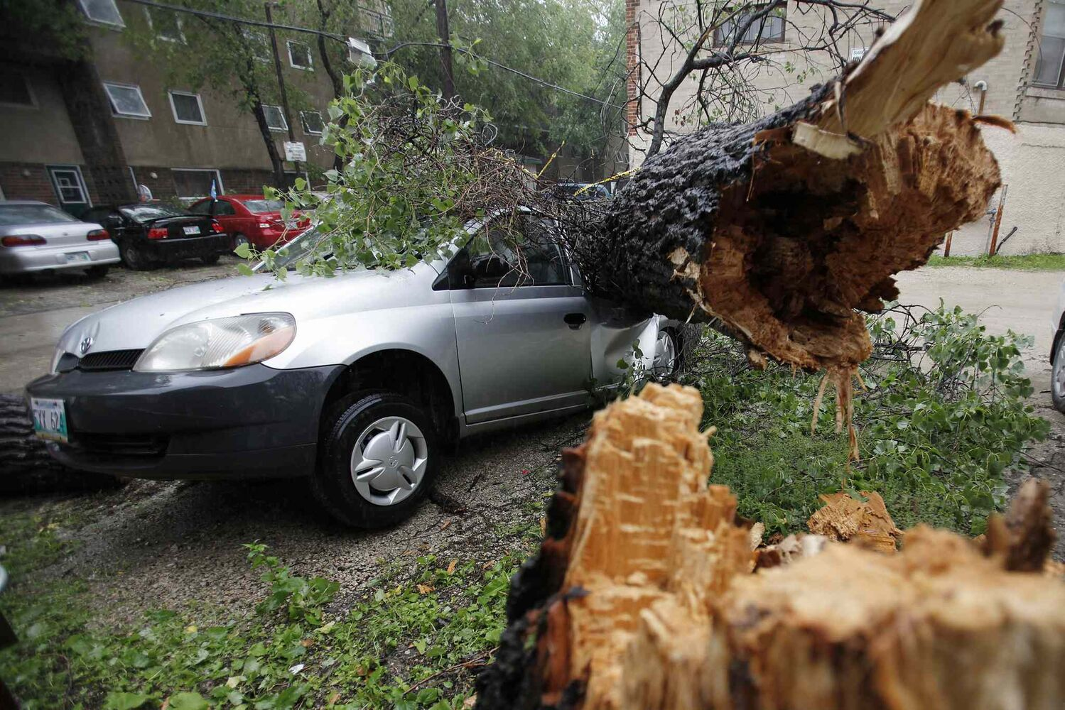 A tree blown over by strong winds crashes through the roof of a parked car in Winnipeg, Sunday morning, June 29, 2014.