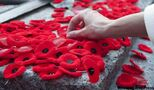 Yes I'm a pacifist — and yes I wear a poppy