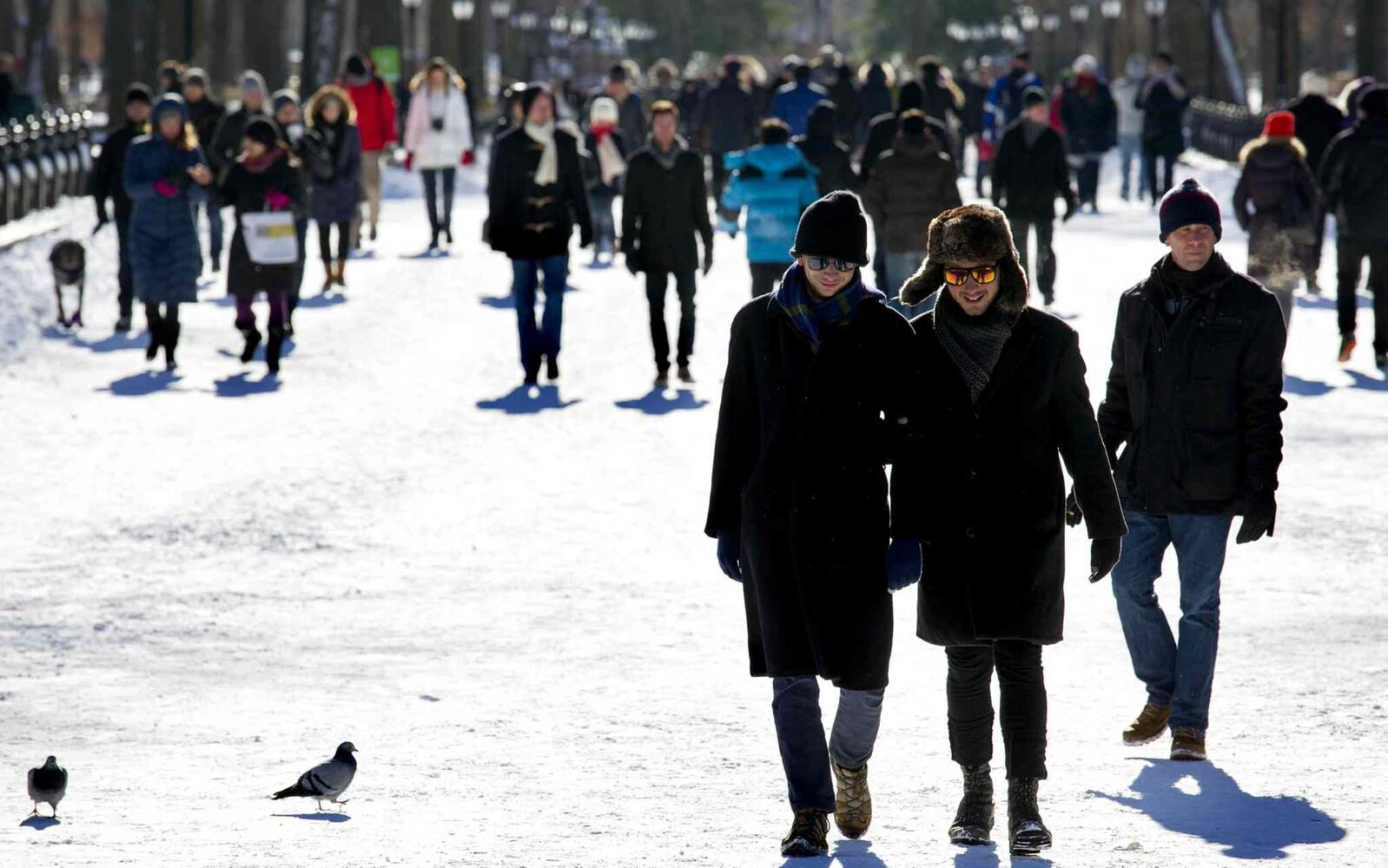 People and animals walk in the cold and snow in Central Park in New York after a snow storm blanketed the area on Friday, Jan. 3. (Craig Ruttle / Tribune Media MCT / Newsday)