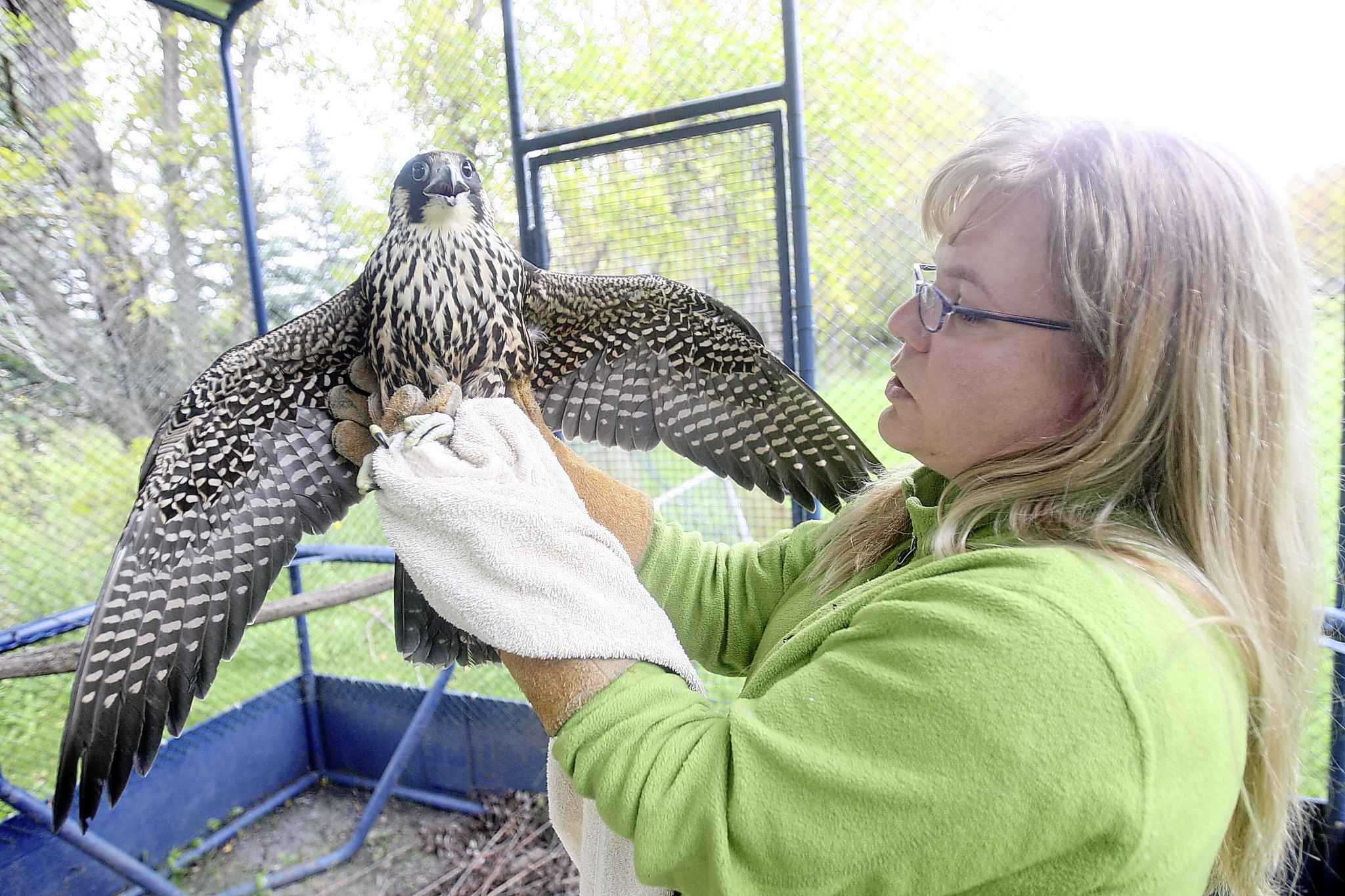 Prairie Wildlife Rehabilitation Centre staff and their animals are regular visitors to local libraries. (Joe Bryksa / Winnipeg Free Press files)