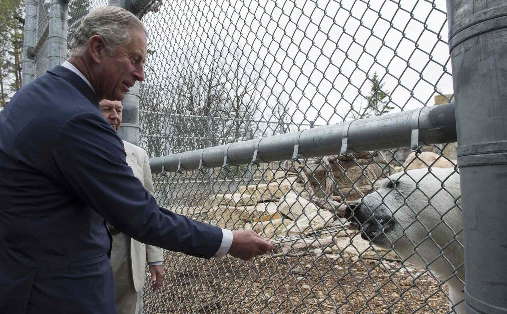Prince Charles feeds Hudson the polar bear at the Assiniboine Park Zoo.  (Paul Chiasson / The Canadian Press)