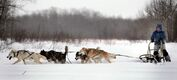 Samantha Page runs her four-dog team at their home near Woodlands, Manitoba.  February 12, 2014  (Phil Hossack / Winnipeg Free Press)