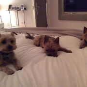 Simon Cowell's new dog Freddy with Squiddly and Diddly (c) Twitter/Simon Cowell
