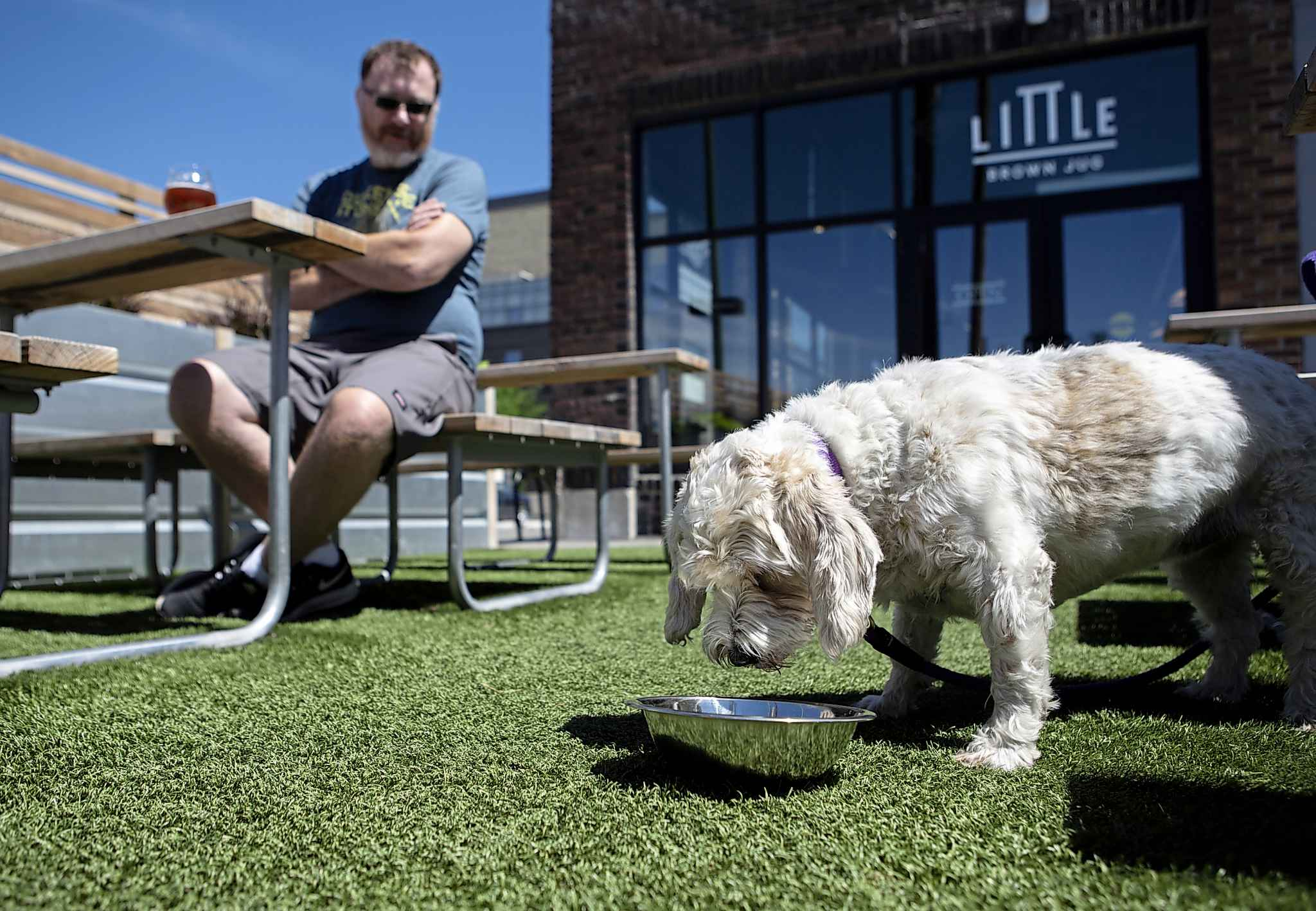 Little Brown Jug owner Kevin Scelch's dog, Penny, on the patio of the establishment. (Andrew Ryan / Winnipeg Free Press)