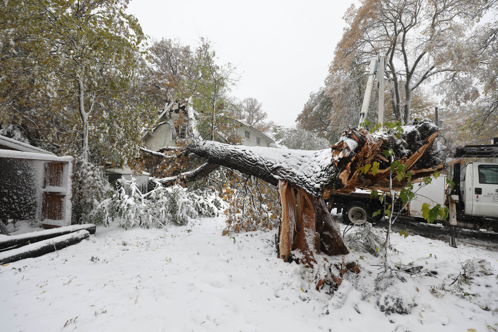 A large oak tree was completely uprooted by the storm and fell on a home at 441 Kingston Crescent at 6 a.m. (Ruth Bonneville / Winnipeg Free Press)