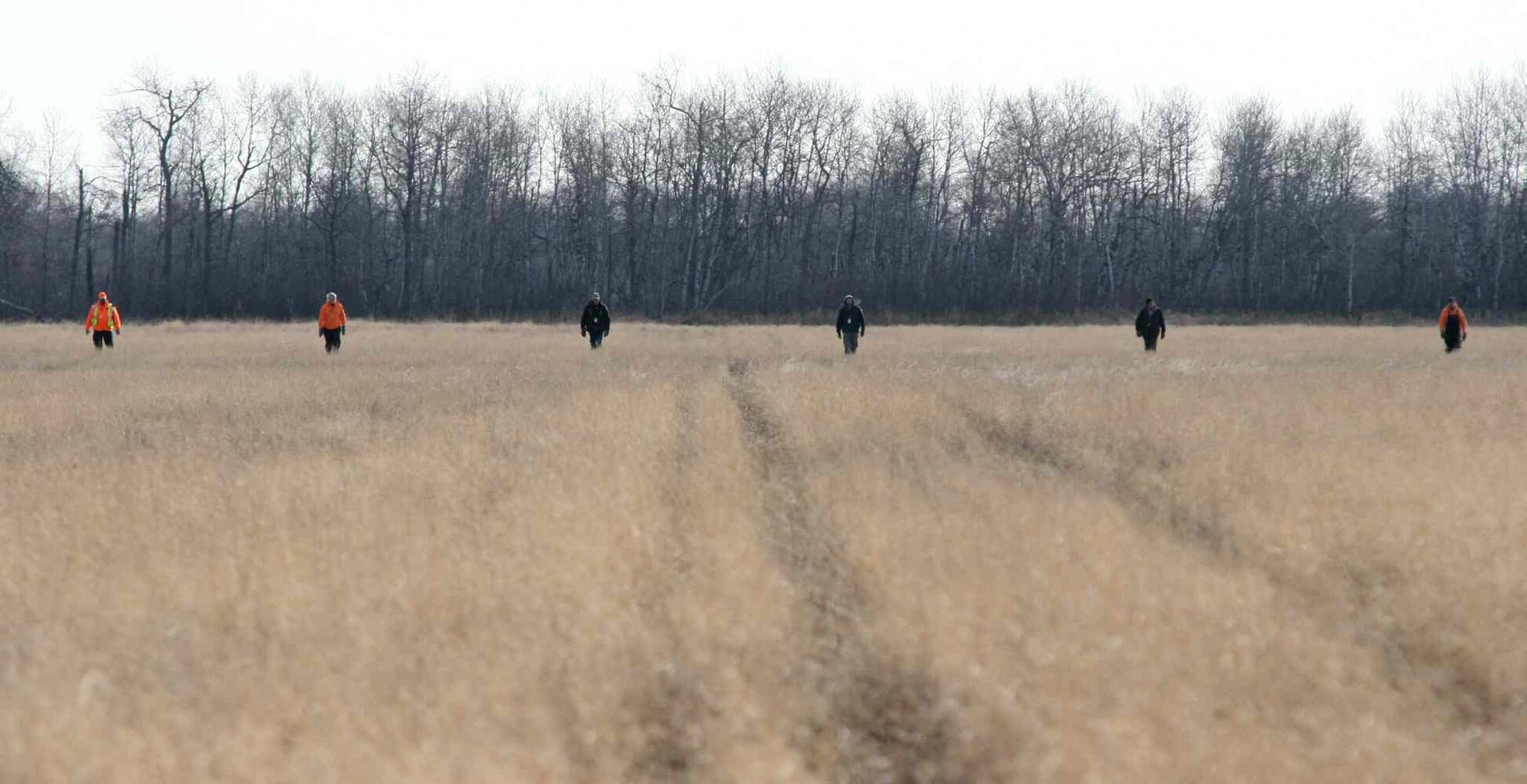 Volunteer search and rescue teams fan out in a field north east of the rural home of Chase Martens, who went missing on Tuesday evening from his back yard. (Matt Goerzen/Brandon Sun)