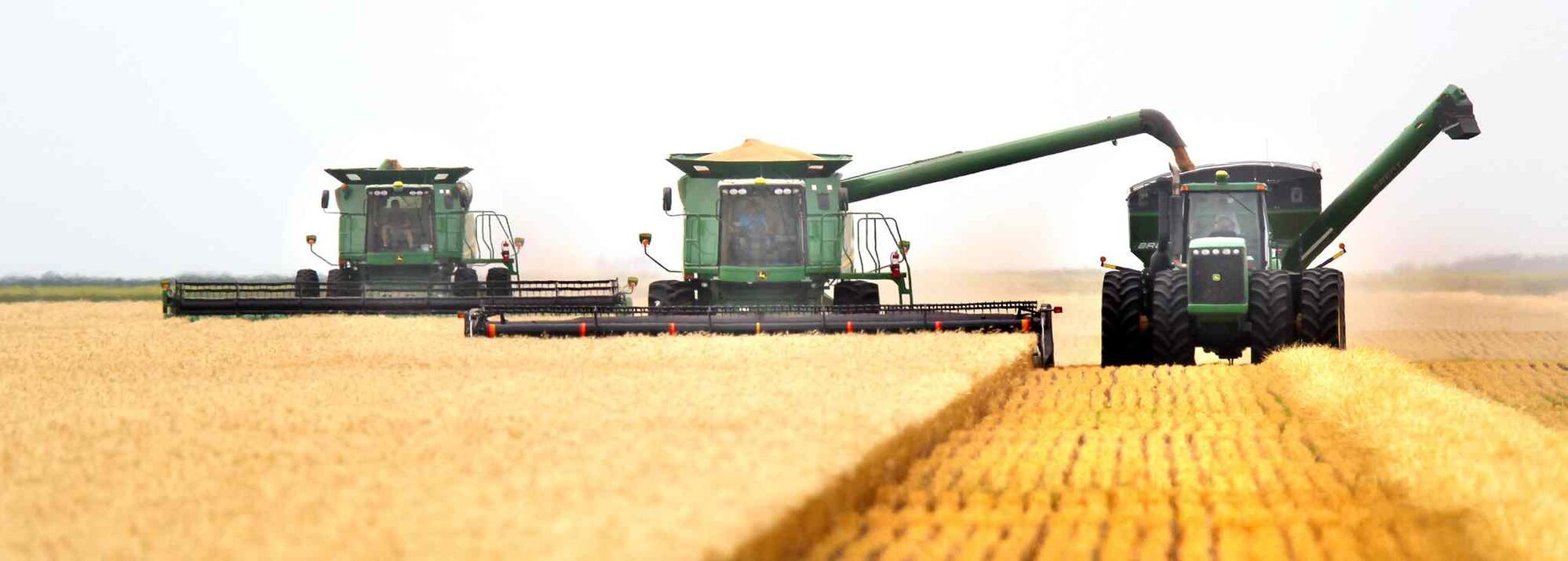 A squad of harvesters reaps early wheat north of Rosenort in mid-July. (Phil Hossack / Winnipeg Free Press)