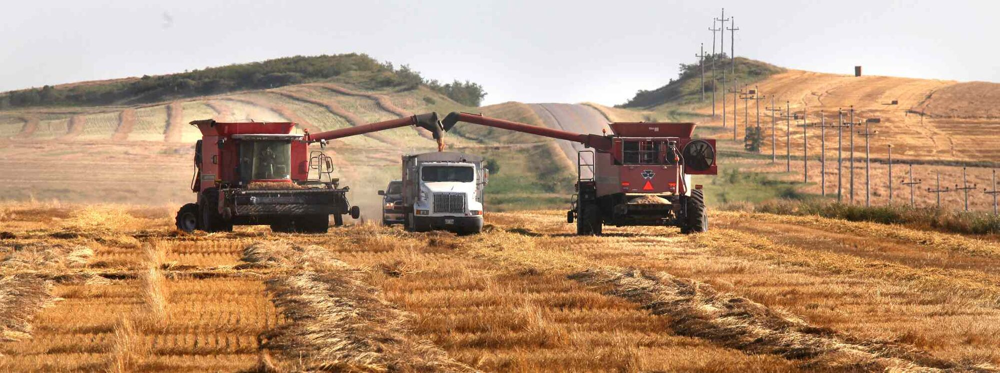 A pair of harvesters dump wheat into a waiting truck near Cardinal.