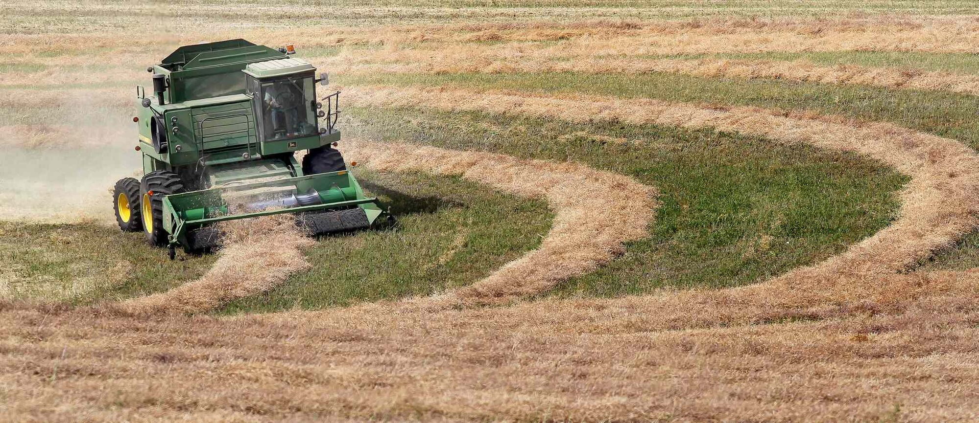 A combine thrashes through swaths of canola in late August on a ridge near Roseisle. (Phil Hossack / Winnipeg Free Press)