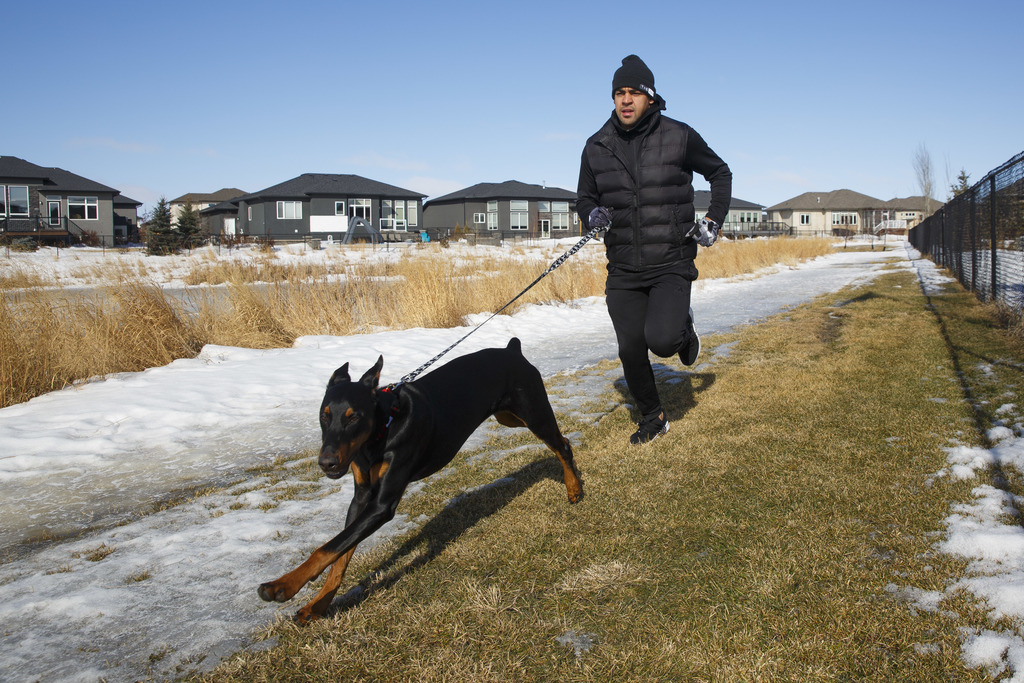 Winnipeg Blue Bombers Andrew Harris out for a run with his 7-month-old rottweiler, Zeus, near his home Wednesday morning.