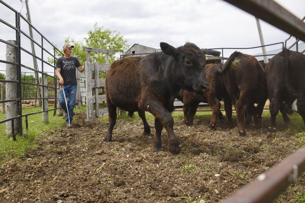The temporary shutdown of Cargill's meat-processing plants in Quebec and Alberta created a backlog in the system and a drop in cattle prices. (Mike Deal / Winnipeg Free Press)