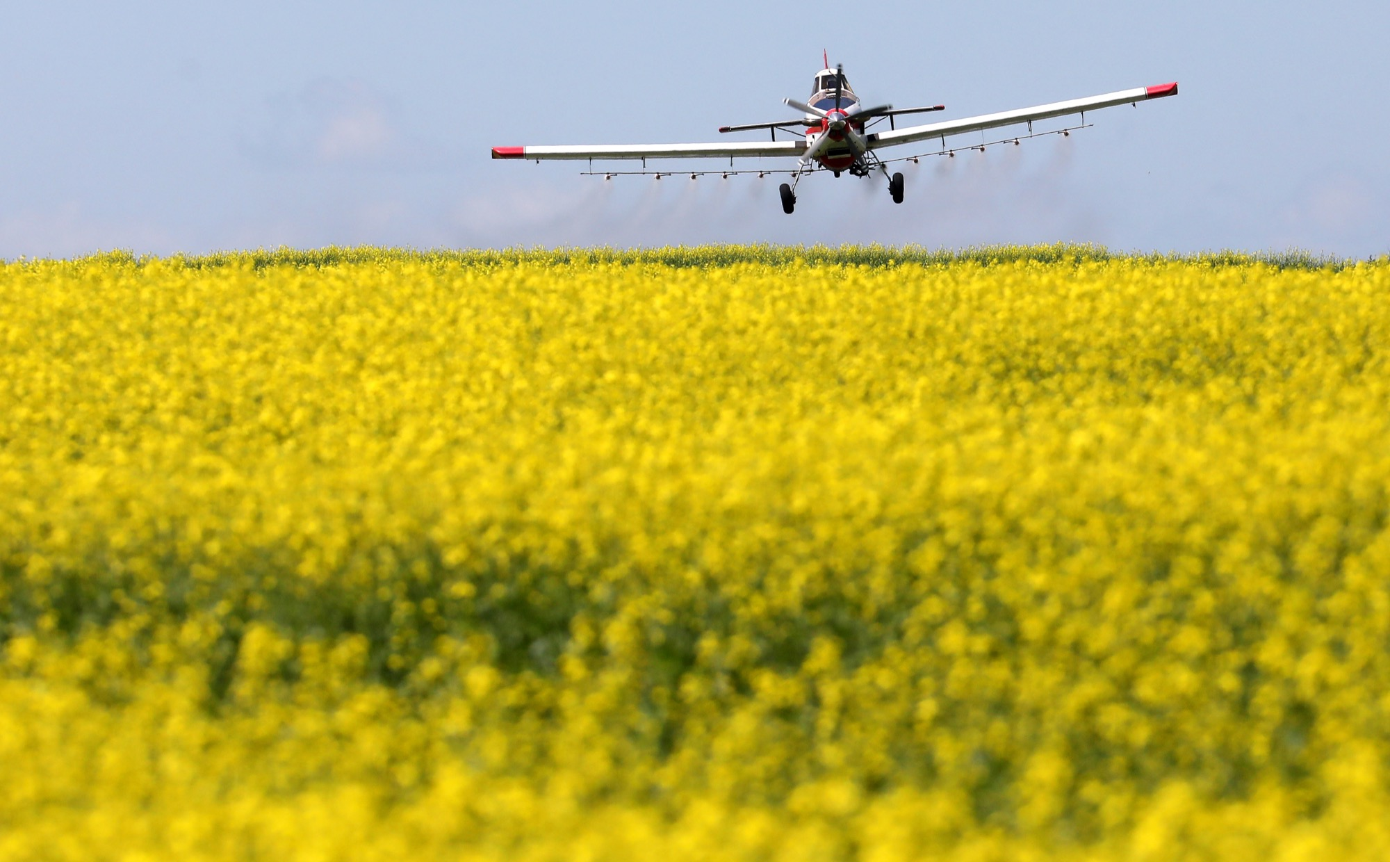 Canadian farmers need access to global markets for products such as canola. Brandon Sun files